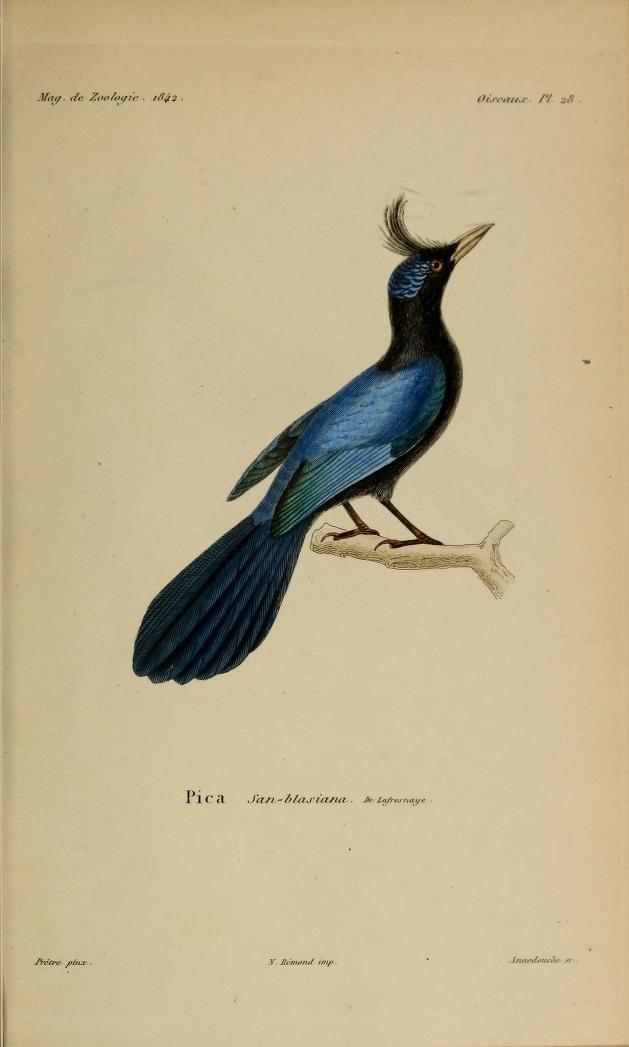 Oiseaux, Pl. 28