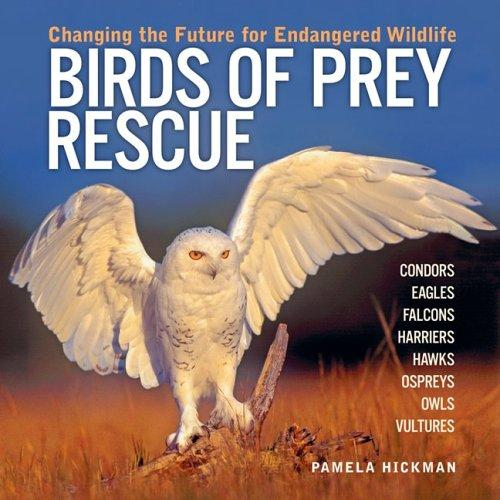 Download Birds of Prey Rescue