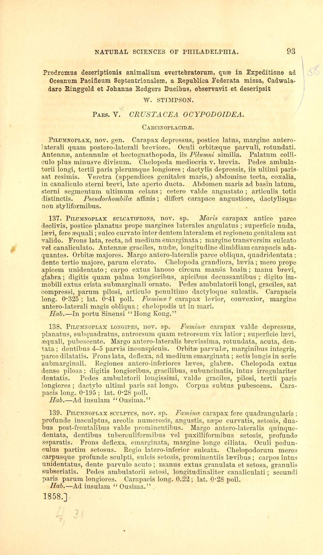 Crustacea Ocypodoidea Carcinoplacidae